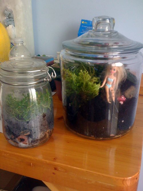 Firstterrarium