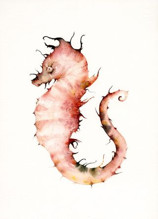 Seahorse in Coral